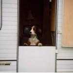 dogs caravan too